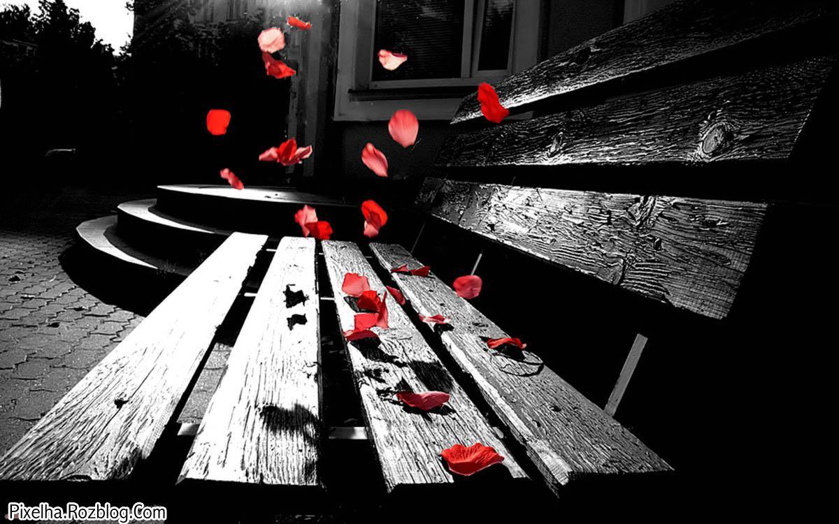 گل قرمز پرپر شده رو نیمکت پارک
