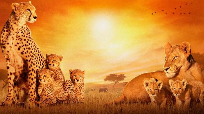 والپیپر حیوانات قاره آفریقا