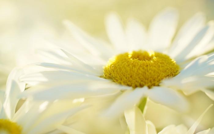 گل بسیار زیبا