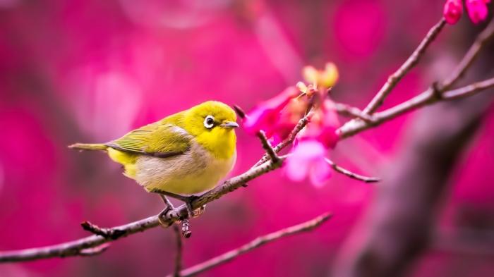 والپیپر پرنده زرد