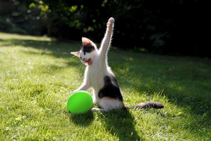 چند عکس جالب و خنده دار از حیوانات