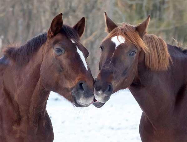 بوسیدن در دنیای حیوانات