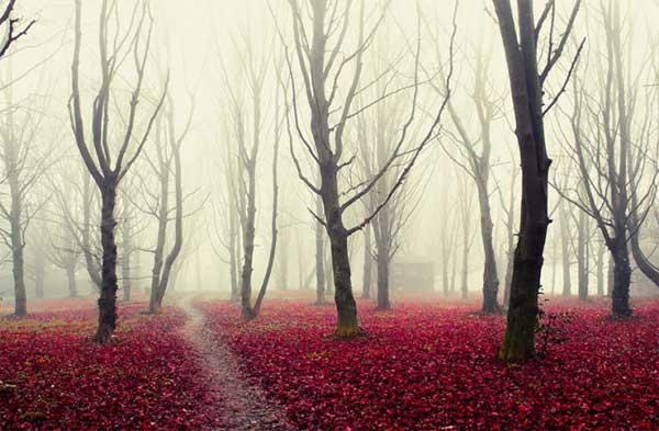 تصاويري آرامش بخش از طبیعت