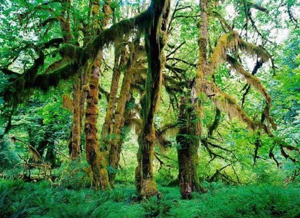 ديدنيترين منظرههاي طبيعي جهان