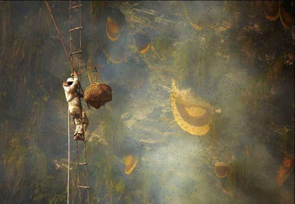 پرورش زنبور در کوه های هیمالیا