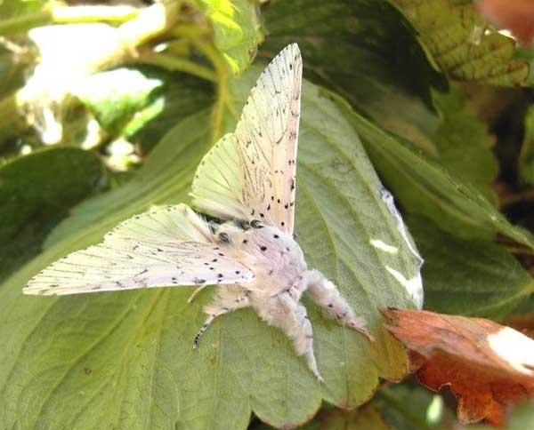 قبل و بعد از تبديل شدن کرم ها به پروانه