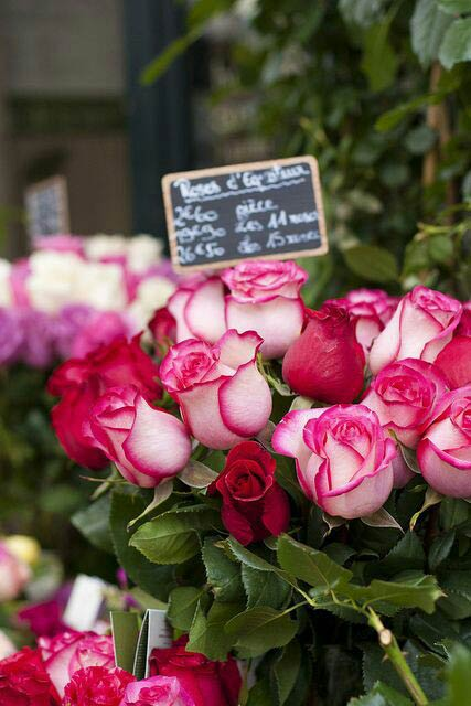 گل رز