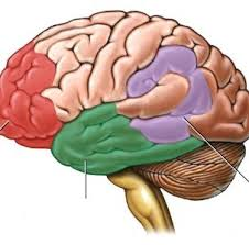 تفاوت مغز خانم ها و آقایون