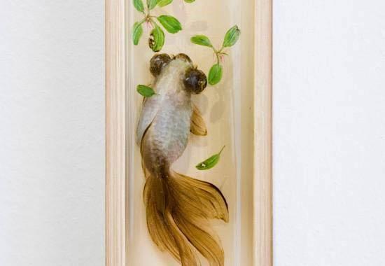 ماهیهای واقعی یا نقاشی سه بعدی