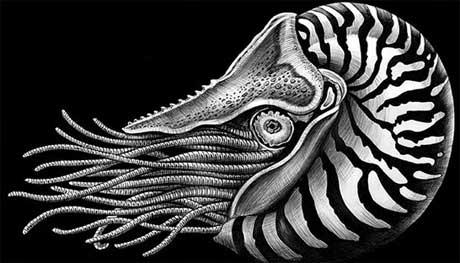 نقاشی با قلم و جوهر