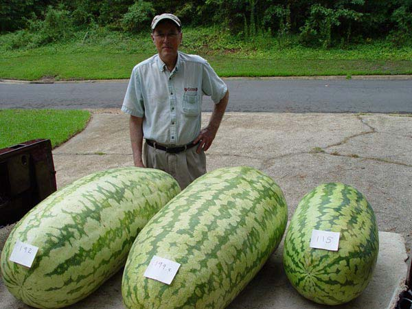 فوايد هندوانه