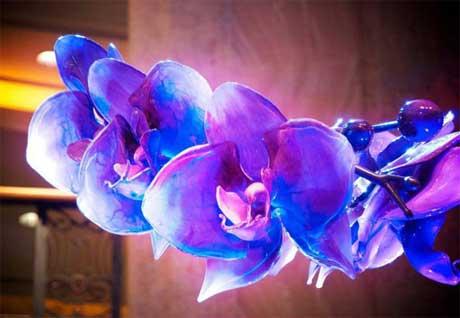 گل هاي شيشه اي