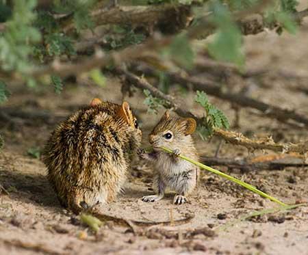 عشق و محبت در قلمروي حيوانات
