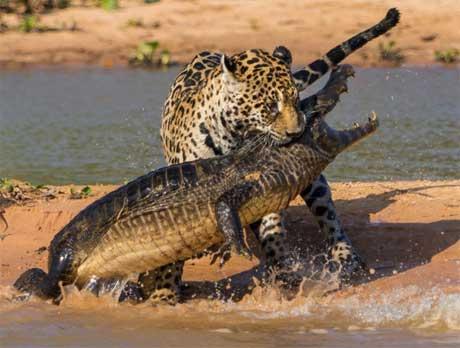 برترین عکس های حیات وحش
