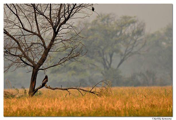 عکس های زیبا از رادکا راماسامی