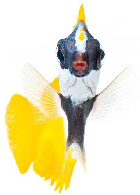 ماهیان زیبا