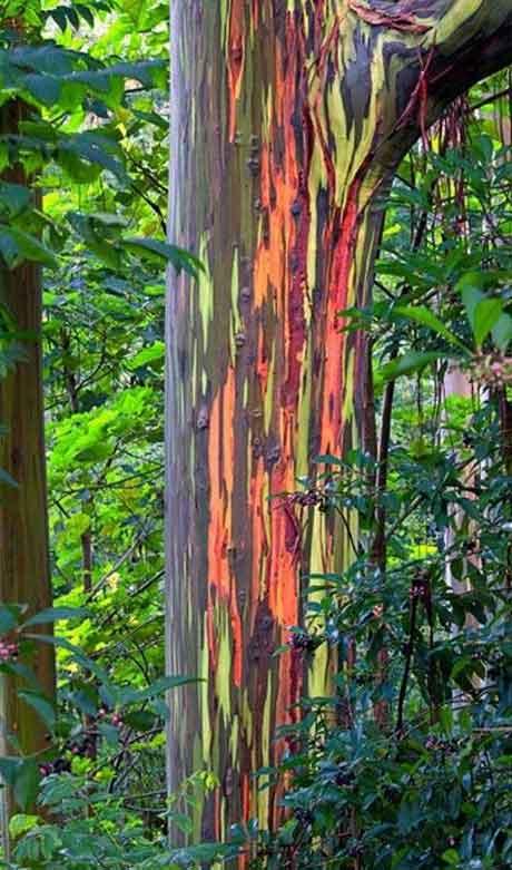 درختان زیبا