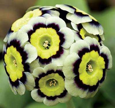 گل های کمیاب و زیبا