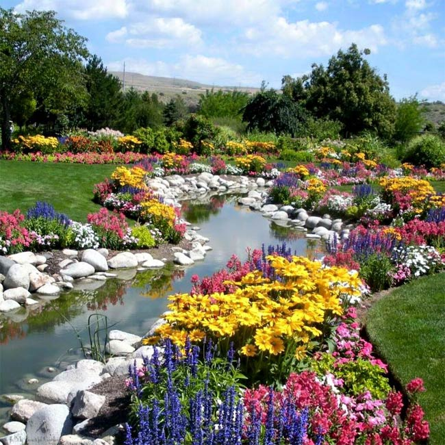 گل های جذاب و دیدنی