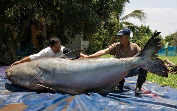 رکورداران صید ماهی های بزرگ