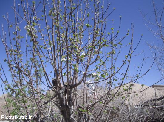 رنگ بهار در روستای رتک