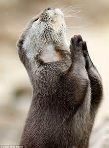 عکس زیبا از دعا کردن یک حیوان