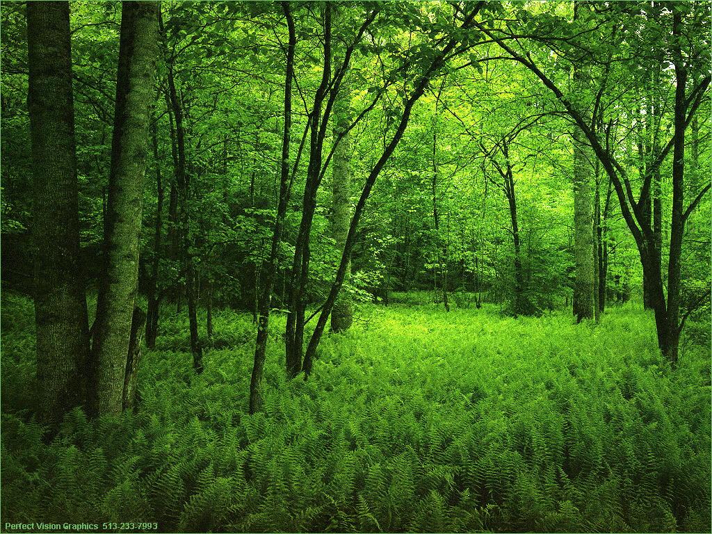 عکس از طبیعت سبز