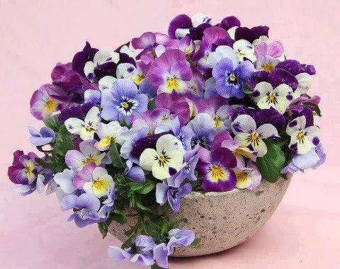 نتیجه تصویری برای گل های زیبا در گلدان ها