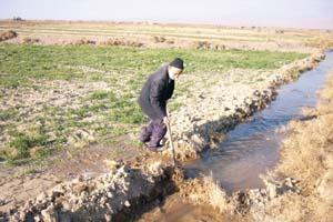 مدیر جهاد کشاورزی: خشکسالی تاثیری بر درآمد کشاورزان سرایان نگذاشته است