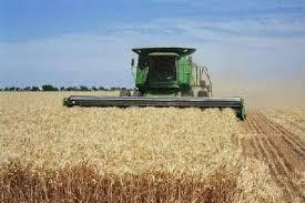 مدیر جهاد کشاورزی سرایان: سرمای بهار، برداشت گندم و جو را 30 درصد کاهش داد