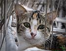 طرح30/شکار گربه