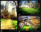 سری دوم عکس های زادگاه من با طبیعت