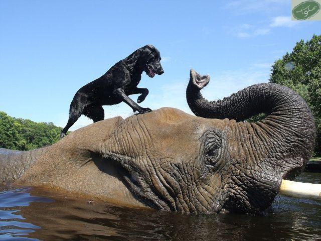 حیوانات هم به هم کمک می کنند