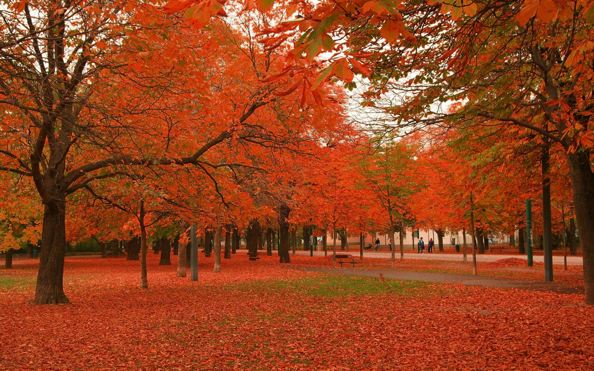 پارک نارنجی