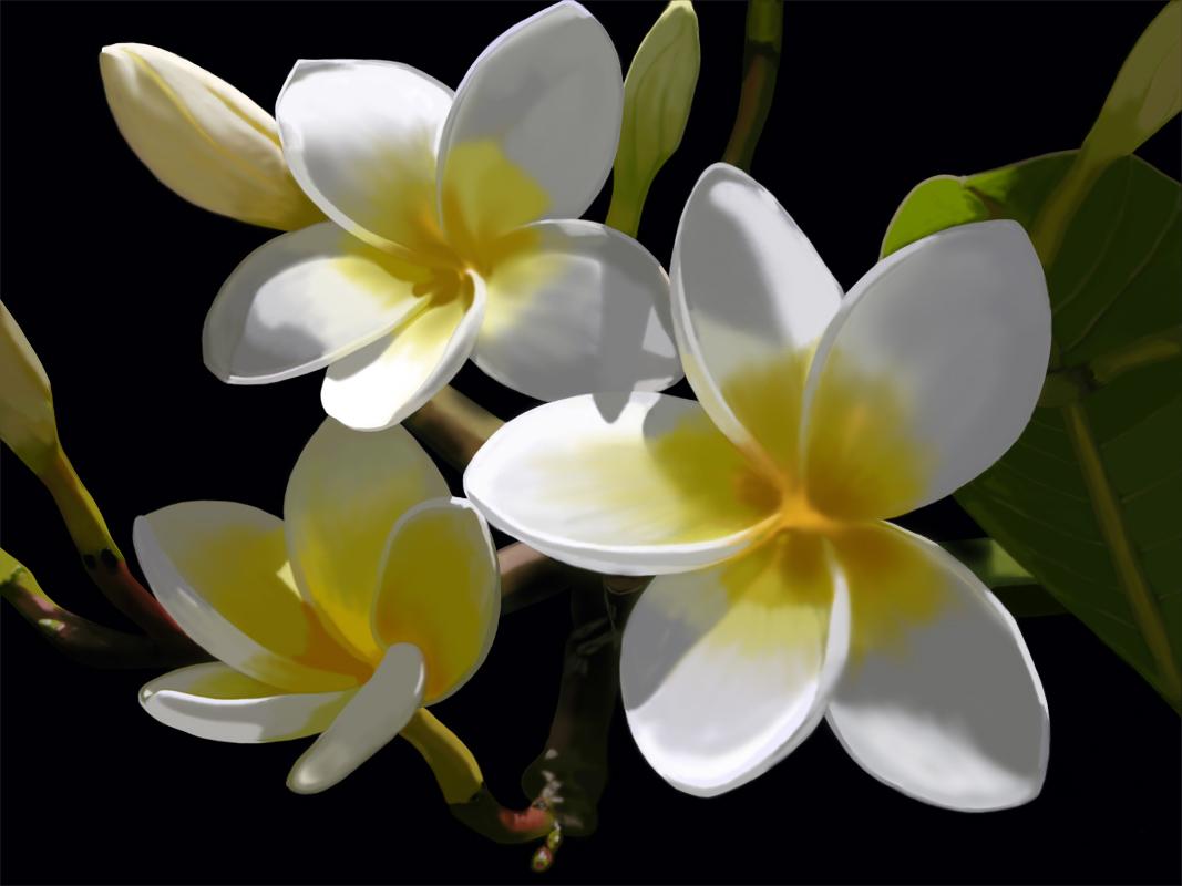 گل زیبا