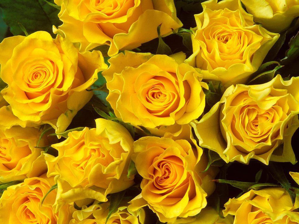 گل های زرد