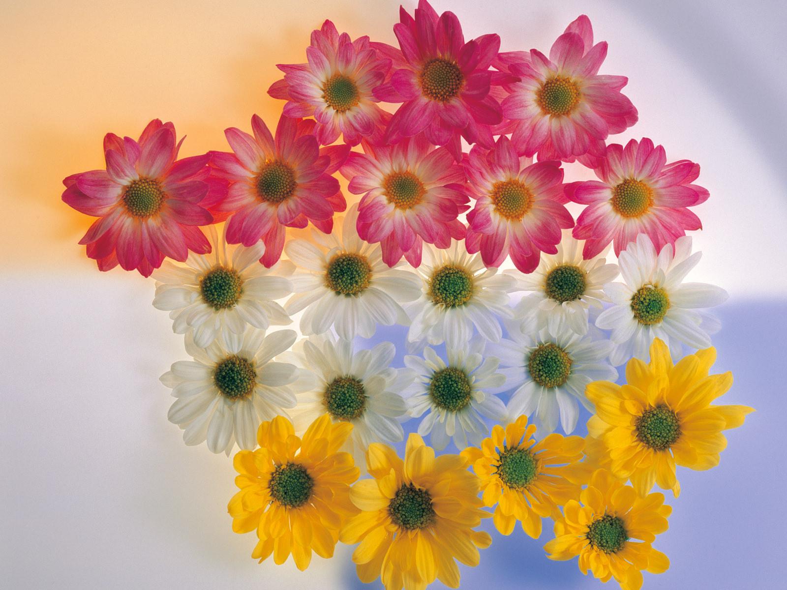 گل های با نظم