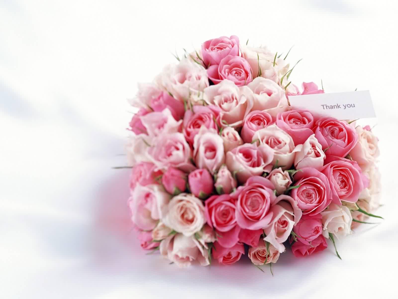 عکس گل رز قرمز با کیفیت بالا