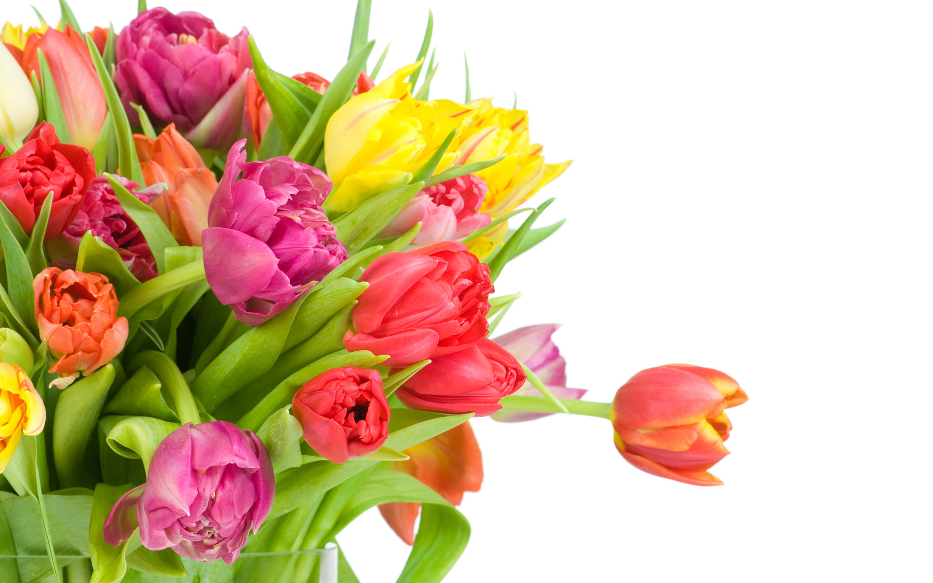 دسته رنگارنگ گل های لاله