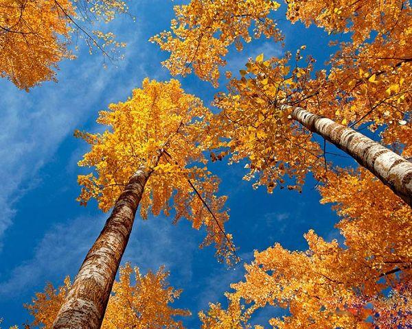 پاییز زرد