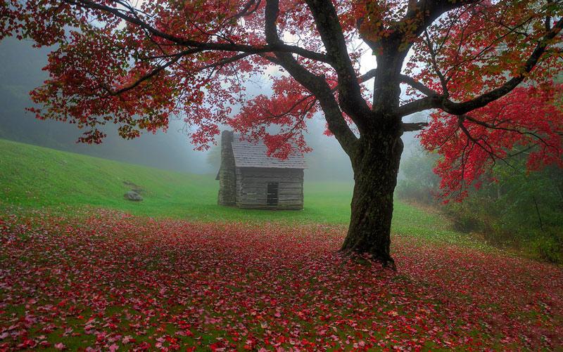 تک درخت پاییزی