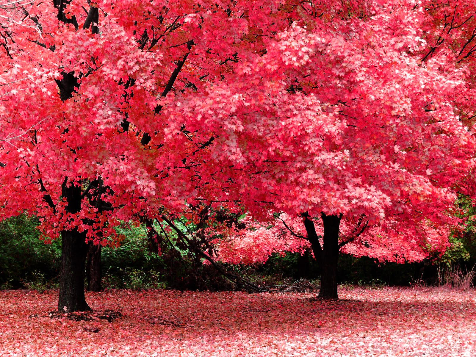 پاییز زیبا تر از بهار