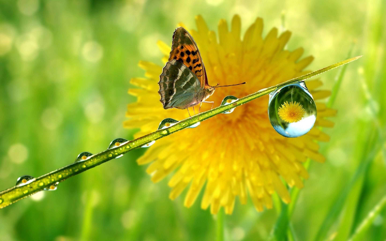 شبنم ، گل و پروانه