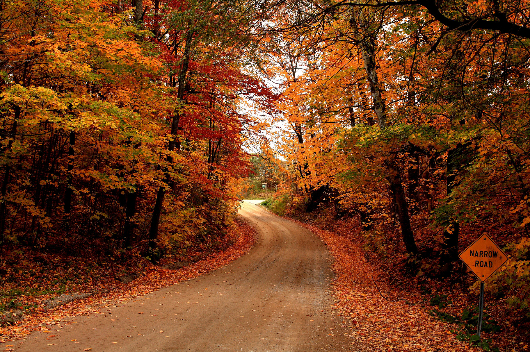 جاده ای به سوی پاییز