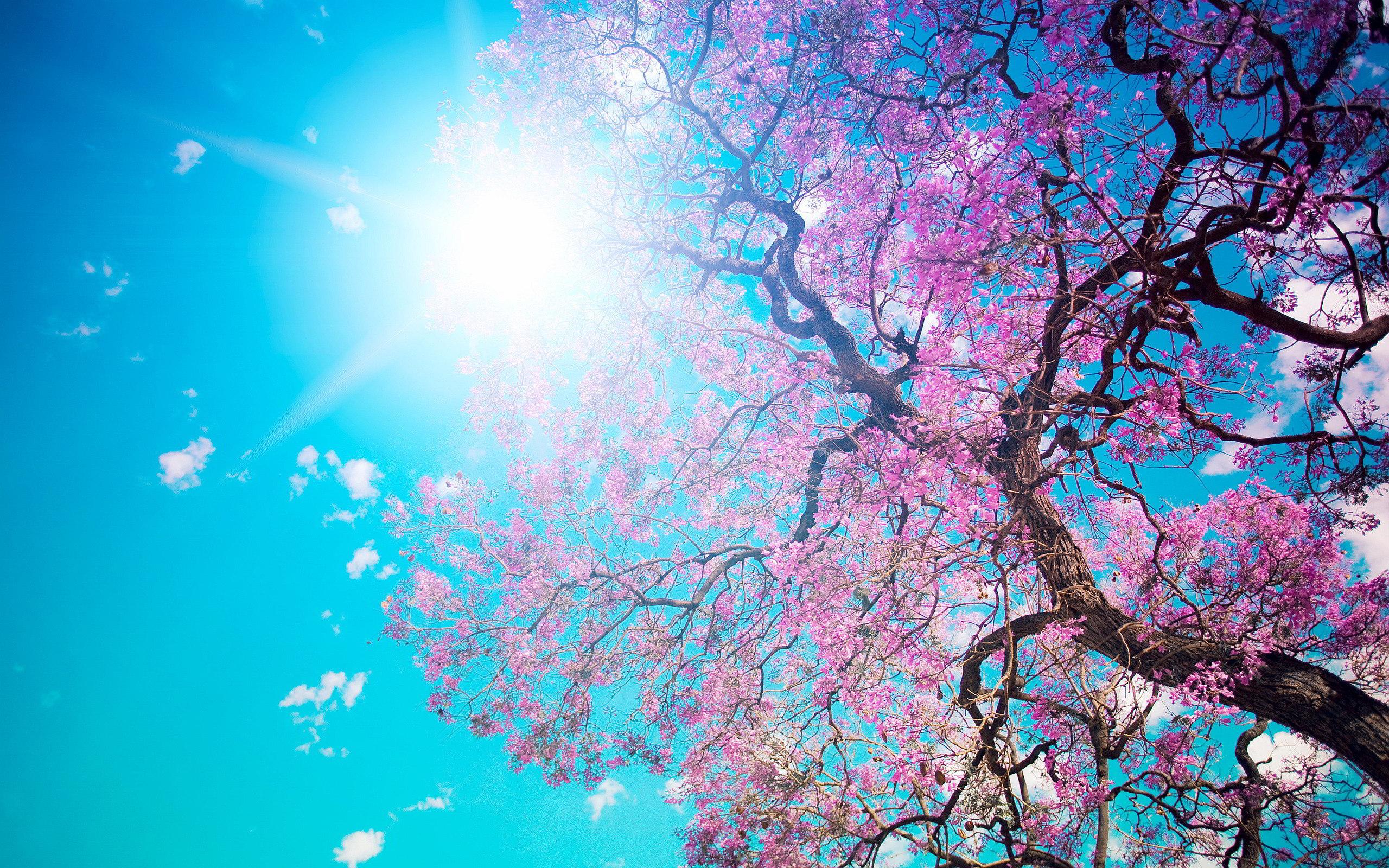 خورشید بهاری