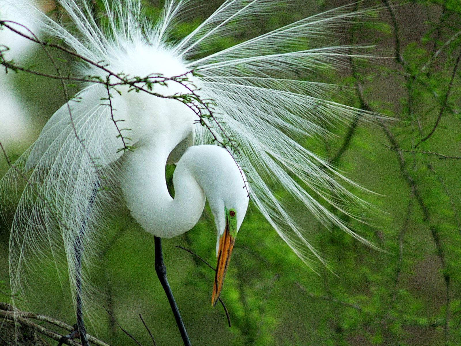 پرنده ای زیبا