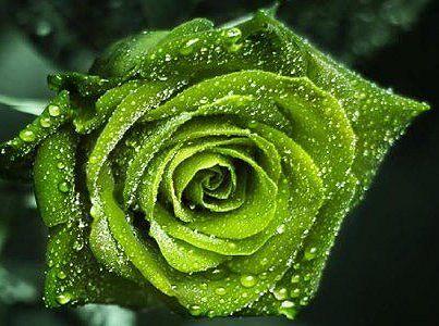 گل سبز