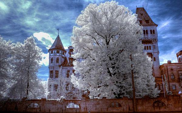 درختان پیر