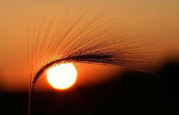 چشمان خورشید