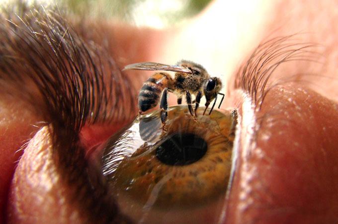 زنبور و چشم